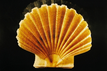 Raymond Hains, Coquille Saint-Jacques, 1995. Collection FRAC Bretagne.